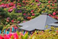 Azalkový festival v Japonsku